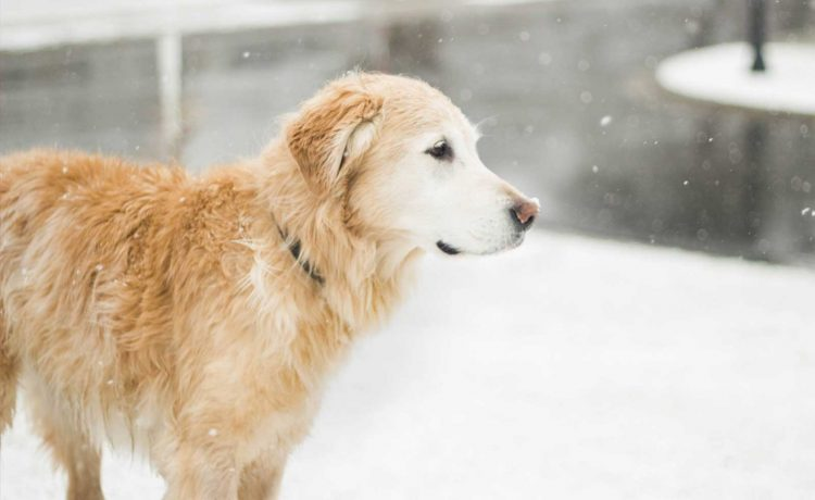 How to stay active but still safe with your dog this winter