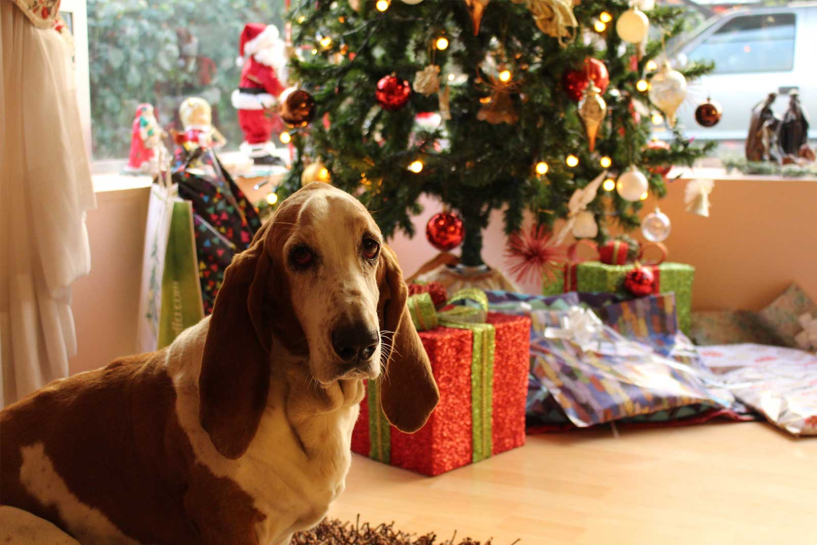 It's that time of year again when people start to panic about what to get their significant other, their pet of course. But don't worry, we've got you covered!